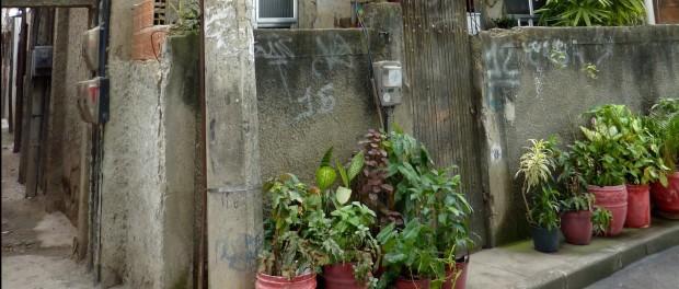 Plantas na Asa Branca