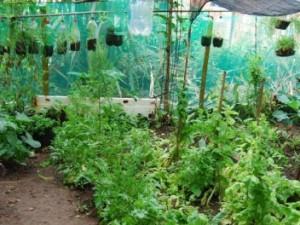 Jardim comunitário na Formiga