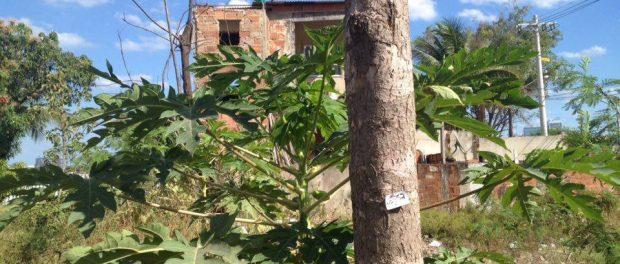 Tree-in-Vila-marked