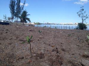 Árvore solitária plantada na beira da Lagoa de  Jacarepaguá.