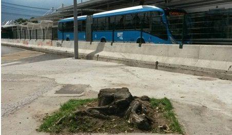 Árvores foram cortadas para a implantação do BRT Transcarioca.