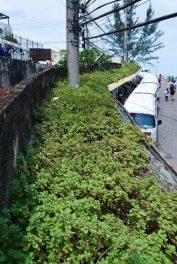 Parada verde, foto por Selmy Yassuda - Veja Rio