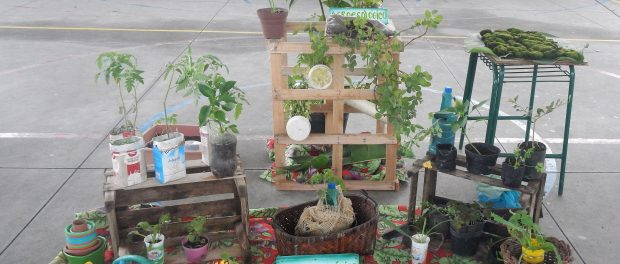 Mudas de plantas cultivadas pelos agricultores locais - foto por Juliana Torres