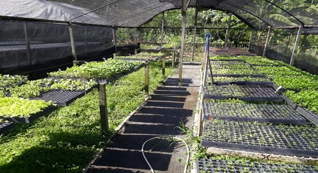 Hortas Cariocas produzem 80 toneladas de alimentos por ano Foto: Reprodução Movimento Baía Viva