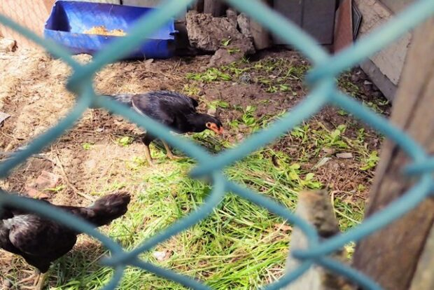 Na horta de Anil, mudas de hortaliças foram dadas aos animais Foto: Reprodução Movimento Baía Viva